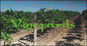 Vineyards Title.png